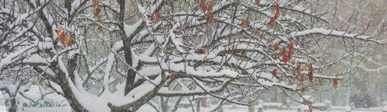 Wybór esejów o słowach i drzewach | Książka tygodnia